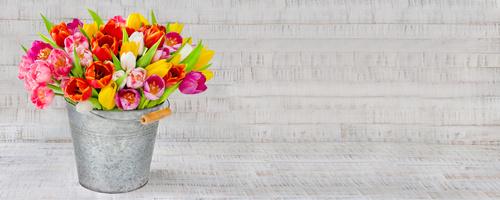 Blumenstrau - Tulpen in einem Zinkeimer